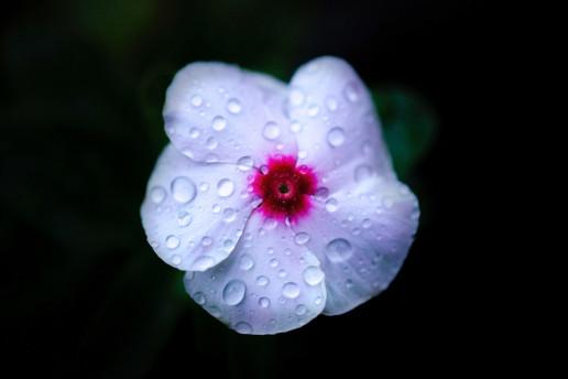 flower uai