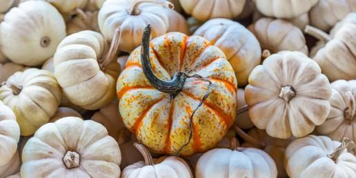 pumpkin uai
