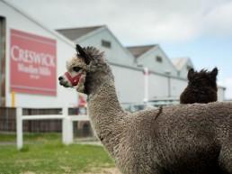 Creswick Woollen Mills 1 uai