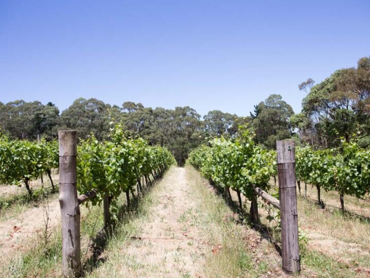 Mount Macedon Winery 1 uai