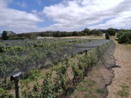 Wombat Forest Winery 3 uai