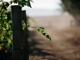 midhill vineyard uai