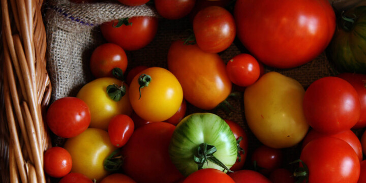 tomatoes 2 uai