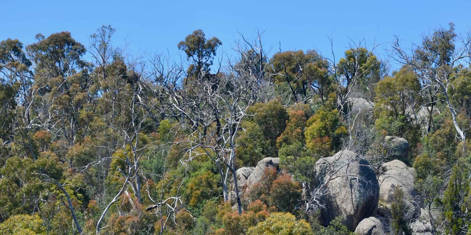 Black Hill Reserve 1 uai