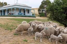 Flophouse Charter Farm 54 uai