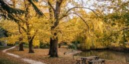 Malmsbury Botanical gardens uai