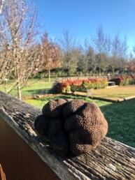 Black Cat Truffles 13 uai