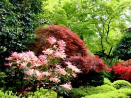 Forest Glade Gardens 4 uai