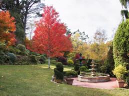 Forest Glade Gardens 6 uai