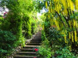 Forest Glade Gardens 8 uai