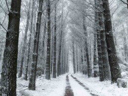 Mount Macedon snow Photo one time use only Lauren Fowler uai