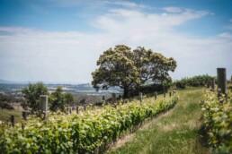 Granite Hills Wine Chris Turner Photo 3 uai