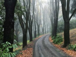 Wombat Hill Botanic Gardens uai
