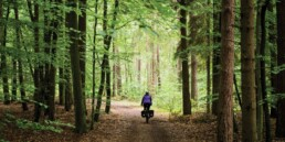forest cycling uai