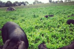 jonai farm 4 uai